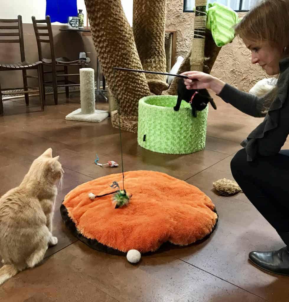 grumpy cat at animal shelter