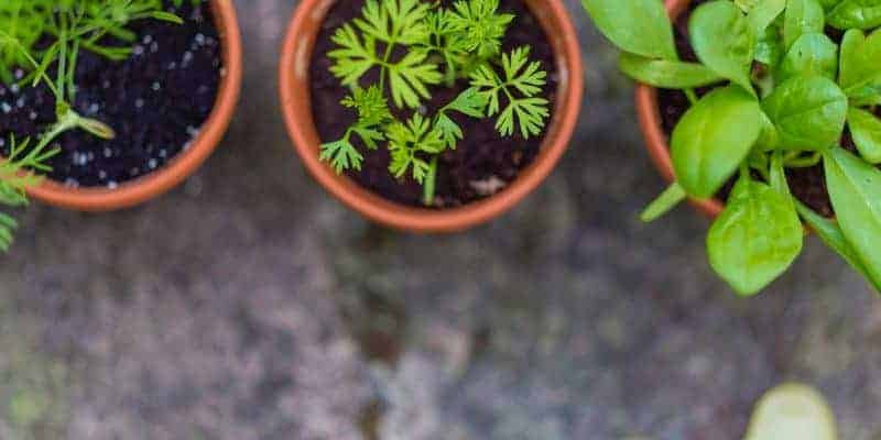 The Easiest Way to Grow an Indoor Herb Garden Without Gardening Skills