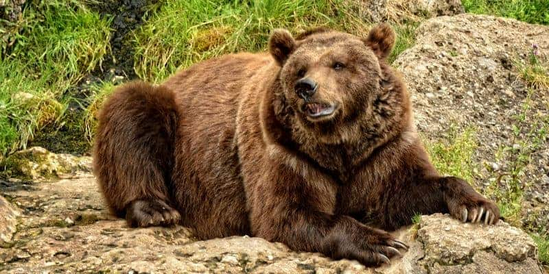 My Defensive Portfolio for the Looming Big Bad Bear Market