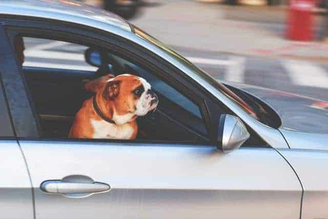 he likes cheap car rentals