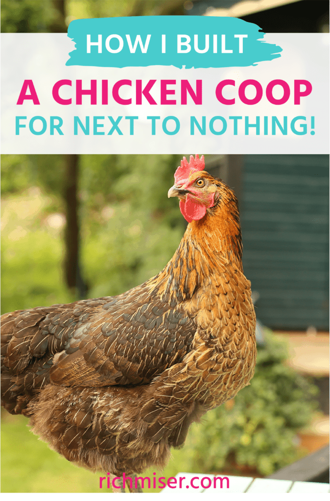 How I Built a Chicken Coop for Next to Nothing!