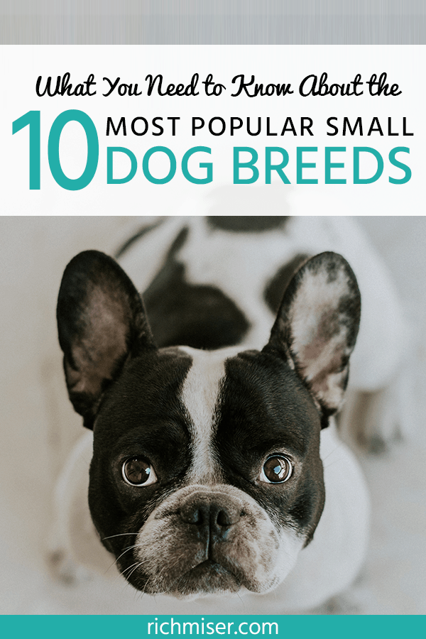 What You Need to Know About the 10 Most Popular Small Dog Breeds
