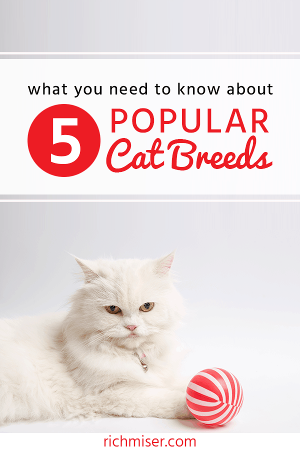 What You Need to Know About 5 Popular Cat Breeds