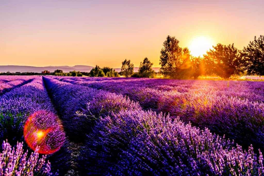 facts about France - beautiful fields